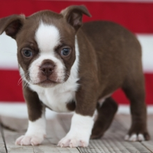Puppies Sold In Wisconsin Puppyspot