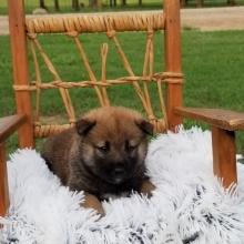 Puppies Sold In Kansas Puppyspot